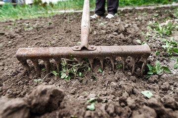 On the soil lie the garden rake. Close-up, Concept of gardening