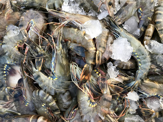 Fresh Seafood Shrimps sales at the market. Phuket in Thailand