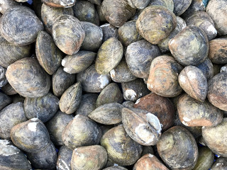 Group of mussels at the market in Thailand