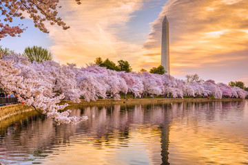 Washington DC in Spring Wall mural