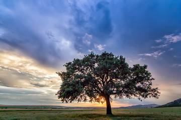 Beautiful landscape with a lonely tree in a field, the setting sun shining through branches and storm clouds, Dobrogea, Romania