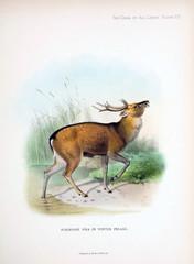 Illustration of a deer.