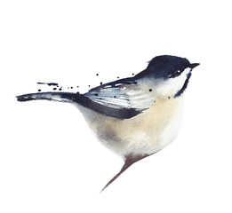 Chickadee bird sitting on the branch watercolor painting illustration isolated on white background