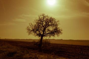 Tree, sunrays