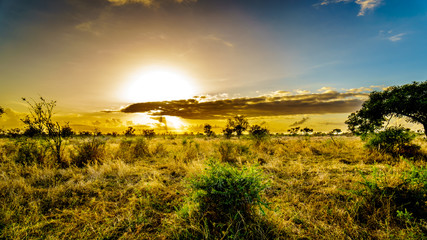 Sunrise over the savanna and grass fields in central Kruger National Park in South Africa Wall mural