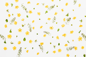 Field buttercups with green leaves and white flowers pattern on white background, flat lay