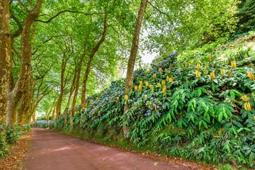 Vegetation und Pflanzen auf Sao MIguel Azoren