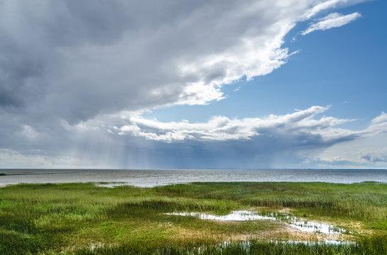 Marshy shore on Lake Võrtsjärv in southern Estonia in summer