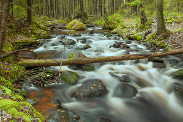 Stone roll on fast forest river long exposure