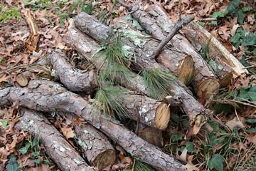 Pine Tree Logs on Leaves