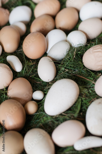 Various Organic Blown Out White And Brown Edible Eggs Such