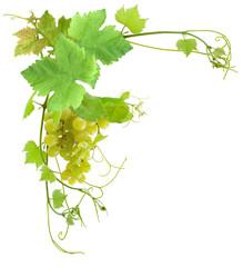 Wall Mural - grappe de raisin blanc et vigne