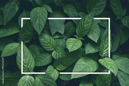 Wall mural creative layout, green leaves with white square frame, flat lay, for advertising card or invitation
