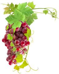 Wall Mural - grappe de raisin rosé et vigne