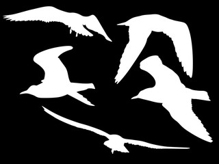 collection of five gull white isolated silhouettes