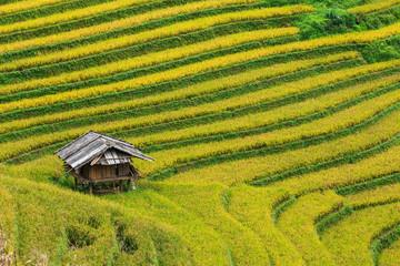 Terrace rice field at Mu Cang Jai, Vietnam.