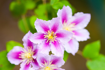 Photography of a summer flowers