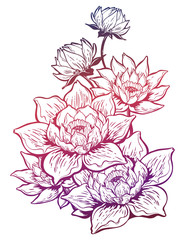 Lotus lily flower in bloom, Asian floral element.