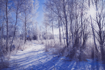 Winter landscape with snow covered trees and road
