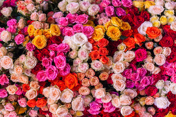 Many small buds of colorful roses.