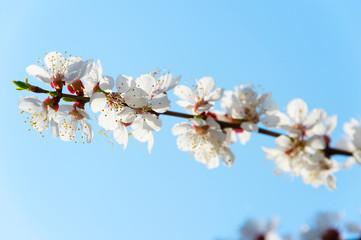 Blossom flowers tree branch spring