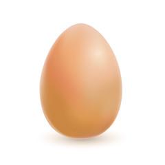 Braunes realistisches Ei