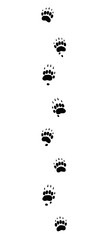 Badger tracks. Typical footprints with long claws - isolated black icon vector illustration on white background.
