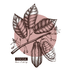 Vector Cocoa beans, leaves, flowers illustration. Hand drawn exotic fruit sketch. Botanical design template.