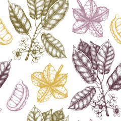 Vector Cola tree illustration. Vintage background with hand drawn with leaves, flowers, fruits and seeds. Botanical seamless pattern. Aromatical elements sketch.