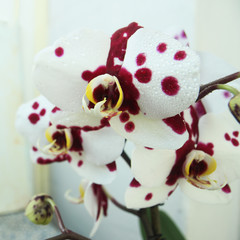 flowers orchid