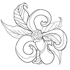 coloring with  Florida dogwood flower   illustration
