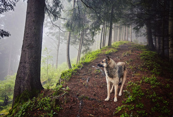 A hunting dog awaits its owner in a misty forest