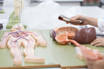 Study of human organs from model in Lab.