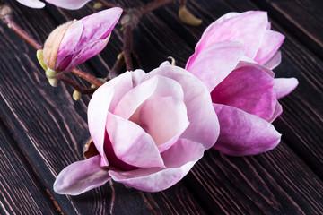 Flower pink magnolia