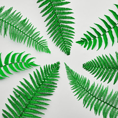 Floral Leaves Fashion Concept. Fern Tropical Leaf. Vivid Design. Art Gallery. Creative Bright Color Background. Minimal Style. Green Summer fashion