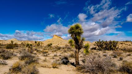 Desert Joshua Trees