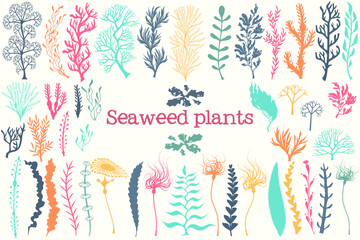 Sea plants and aquarium seaweed vector set.