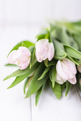 Beautiful spring flowers tulips on a white background. Free space