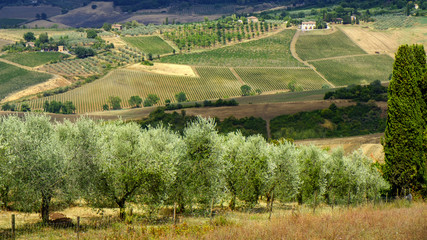 Summer landscape near Montepulciano