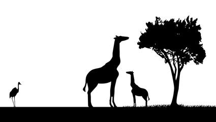 girafe et son petit ombre chinoise