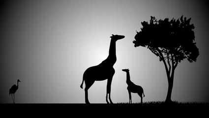 girafe et son petit soir