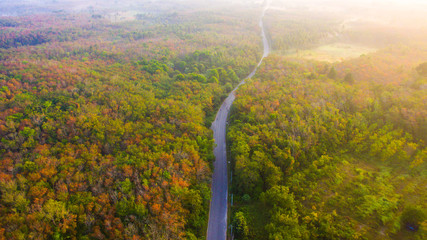Aerial view forests are changing color and rural roads through the forest