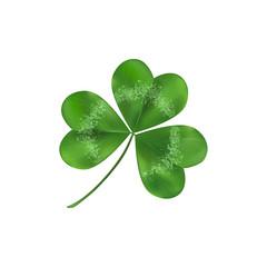 Green Shamrock leaf symbol of luck. Isolated on white background.