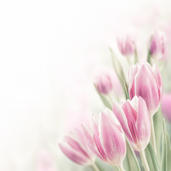 Spring Background with Tulip