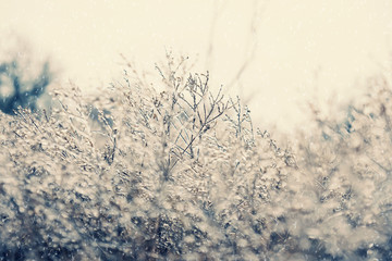 Cold temperature leaves snow and ice on plant in nature.  Winter landscape with icy texture from frost, creates monochrome pattern background image.
