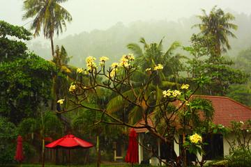 Tropical rainforest in Borneo, Malaysia