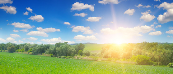 Green field and blue sky with light clouds. Above the horizon is a bright sunrise. Wide photo
