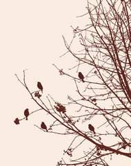 Birds on the rowan branches in winter
