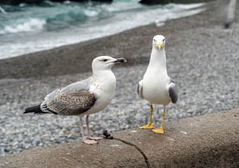White and grey seagulls on rest