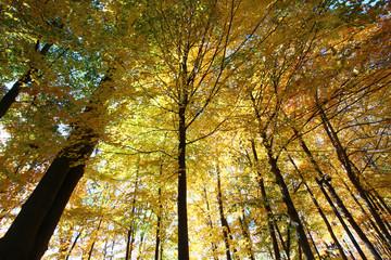 Autumn trees with colorful foliage